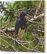 Kissimmee Bird Wood Print