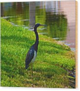 Kissimmee Pond Bird Wood Print