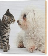 Kitten & Pup Confrontation Wood Print