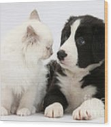 Kitten And Border Collie Pup Wood Print