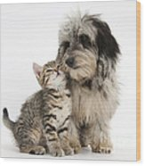 Kitten And Daxie-doodle Puppy Wood Print
