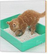 Kitten And Litter Tray Wood Print