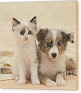 Kitten And Pup Wood Print by Jane Burton