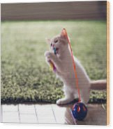Kitten Catches Feather Toy Wood Print