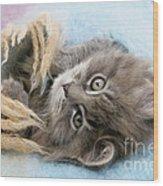Kitten In Blanket Wood Print
