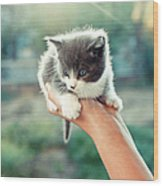 Kitten In Hand, 2010 Wood Print