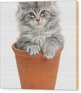 Kitten In Pot Wood Print