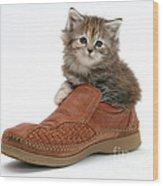 Kitten In Shoe Wood Print