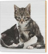 Kitten Pals Wood Print