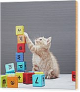 Kitten Playing With Building Blocks Wood Print