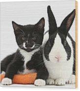 Kitten, Rabbit And Carrot Wood Print