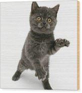 Kitten Reaching Wood Print