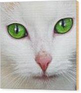 Kitten With Green Eyes Wood Print