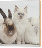 Kitten With Rabbits Wood Print