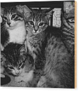Kittens Corner Wood Print by Christy Leigh