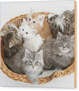 Kittens In Basket Wood Print