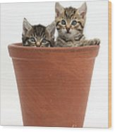 Kittens In Flowerpot Wood Print