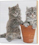 Kittens In Pot Wood Print
