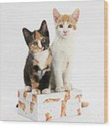 Kittens On Birthday Package Wood Print