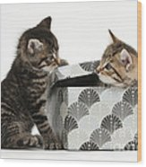 Kittens Playing With Box Wood Print