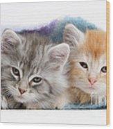 Kittens Under Blanket Wood Print
