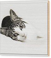 Kitty Cat Greeting Card Get Well Soon Wood Print