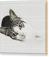 Kitty Cat Greeting Card I Miss You Wood Print