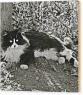 Kitty In A Vineyard Wood Print