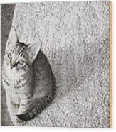 Kitty's Shadow Wood Print