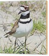 Klassic Killdeer Wood Print by Lynda Dawson-Youngclaus