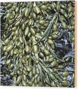 Knotted Wrack Seaweed Wood Print