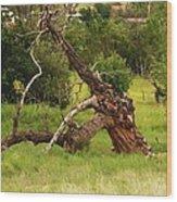 Knotty Tree Wood Print
