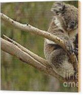 Koala At Work Wood Print