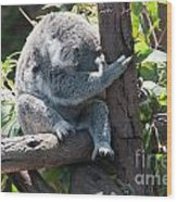 Koala Wood Print by Carol Ailles