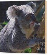 Koala In A Gum Tree Wood Print