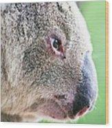 Koala Profile Portrait Wood Print by Johan Larson