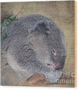 Koala Sleeping Wood Print by Betty LaRue