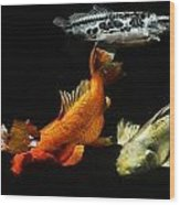 Koi By The Lillies Wood Print by Don Mann