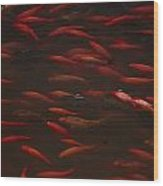 Koi Fish In China Wood Print
