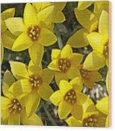 Kolpakowskis Tulip Tulipa Wood Print
