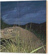 Komodo Dragon Varanus Komodoensis Wood Print