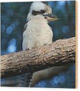Kookaburra Wood Print
