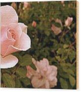 La Vie En Rose Wood Print