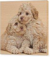 Labradoodle Puppies Wood Print