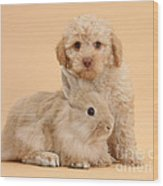 Labradoodle Puppy With Rabbit Wood Print