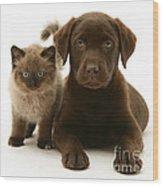 Labrador Pup And Birman-cross Kitten Wood Print