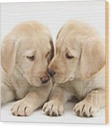 Labrador Retriever Puppies Wood Print