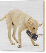 Labrador X Golden Retriever Puppy Wood Print