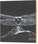 Lace Wings Wood Print
