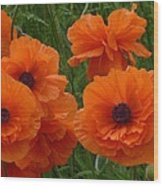 Lacy Poppies Wood Print